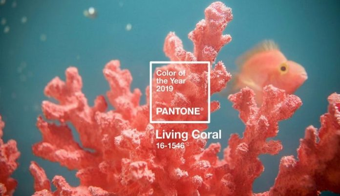 Living Coral is Pantone's 2019 colour of the year.