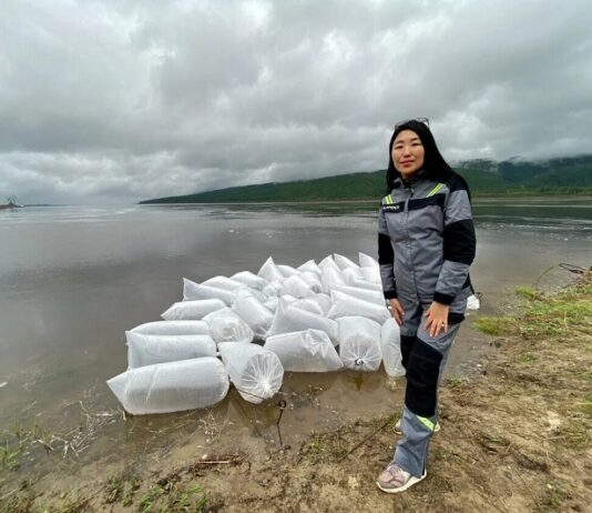 ALROSA Ecology Center launches its annual rivers stocking program in Yakutia