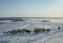 ALROSA partners with a major environmental project in Yakutia